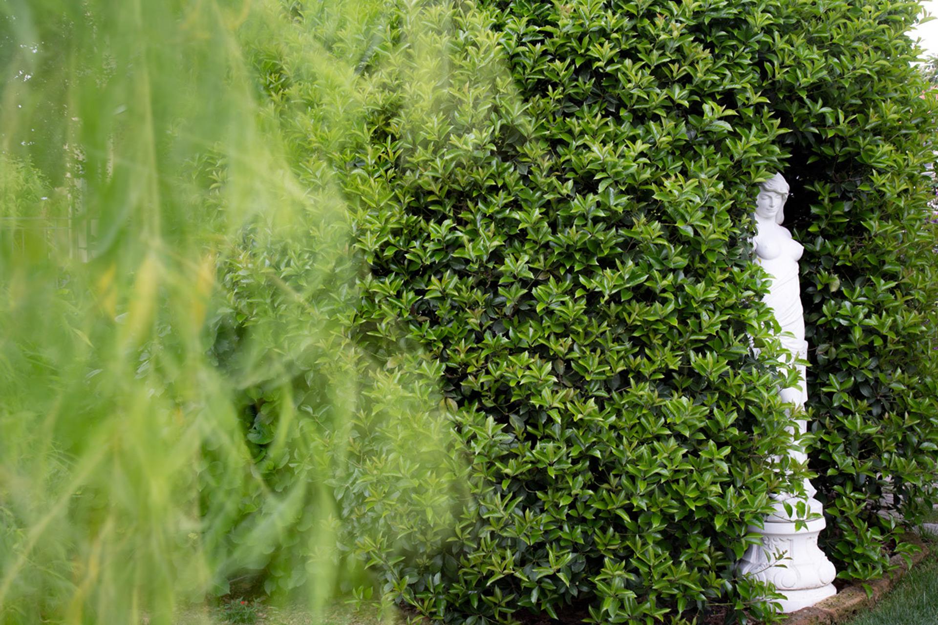 Piante Per Giardini Moderni capponi giardini